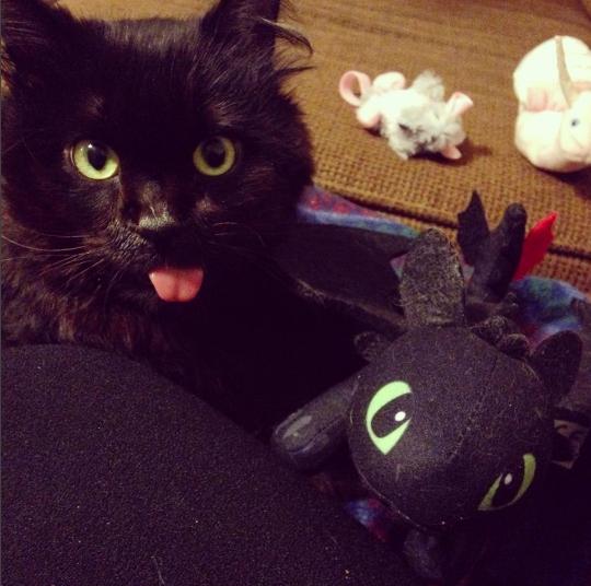 13. Двойники отлично ладят драконология, драконы, коты, кто дайджест, черный кот
