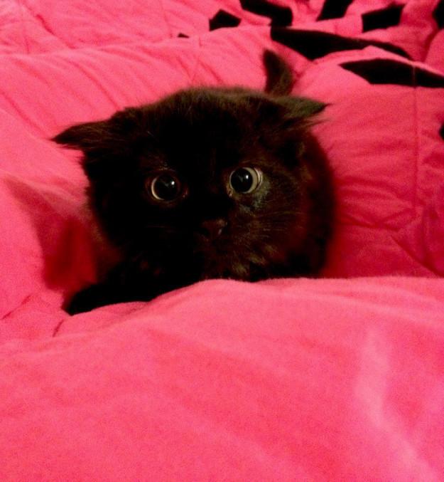 5. Малыш скоро вырастет и расправит крылышки драконология, драконы, коты, кто дайджест, черный кот