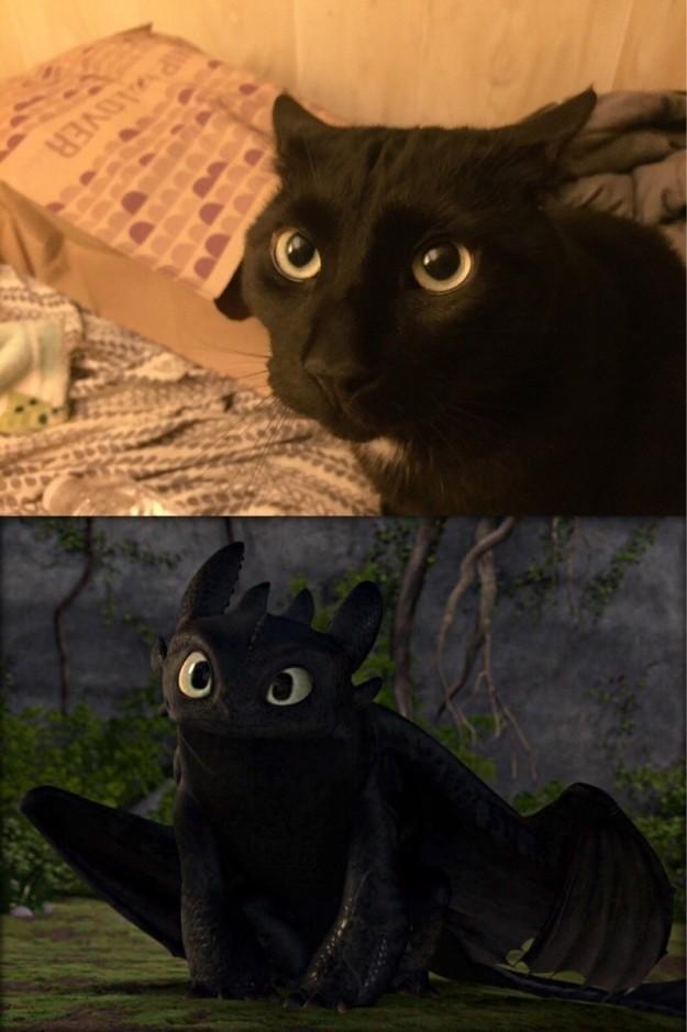 3. Кроткий ангел, но нас не проведешь драконология, драконы, коты, кто дайджест, черный кот