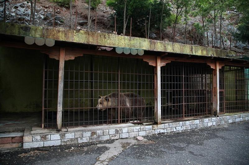 Владелец ресторана, который отказался называть свое имя, списал тревожное поведение медведя на «скуку», но при этом настоял, что заключение в клетке 24 часа в сутки ему не вредит албания, животные, защита животных, медведь