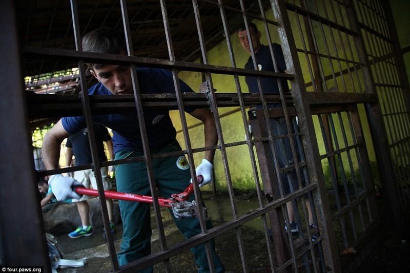 Во вторник, спустя два месяца после того, как портал MailOnline опубликовал первую статью о Томи, власти Албании совместно с организацией Four Paws провели спасательную операцию и «конфисковали» медведя албания, животные, защита животных, медведь