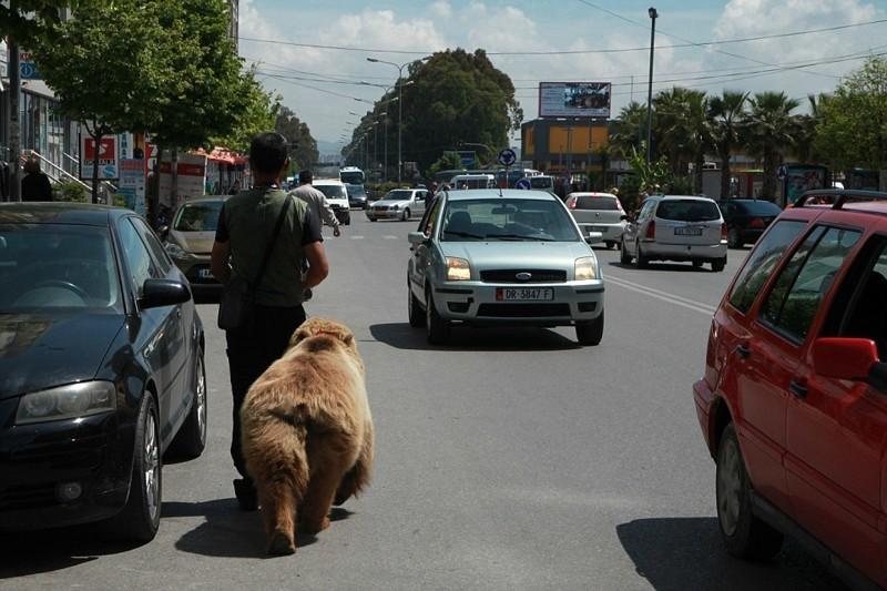 Спасение самого грустного в мире медведя: мишка Томи наконец-то свободен! албания, животные, защита животных, медведь