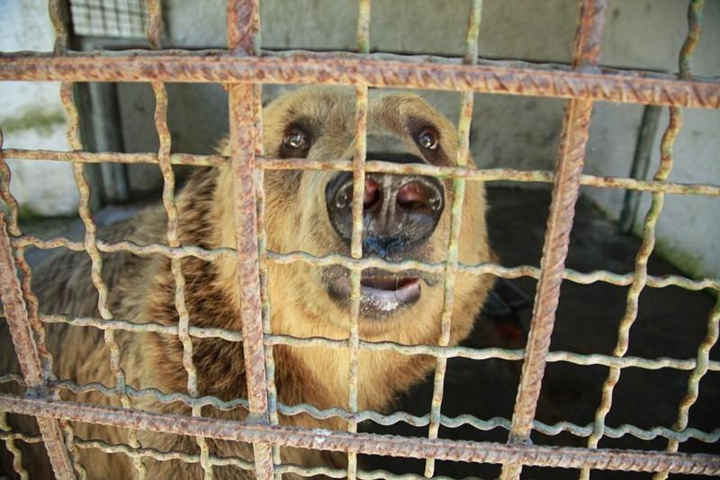 Организация FOUR PAWS создала петицию с требованием создать новые законы по защите медведей Албании и проследить за соблюдением уже действующих албания, животные, защита животных, медведь
