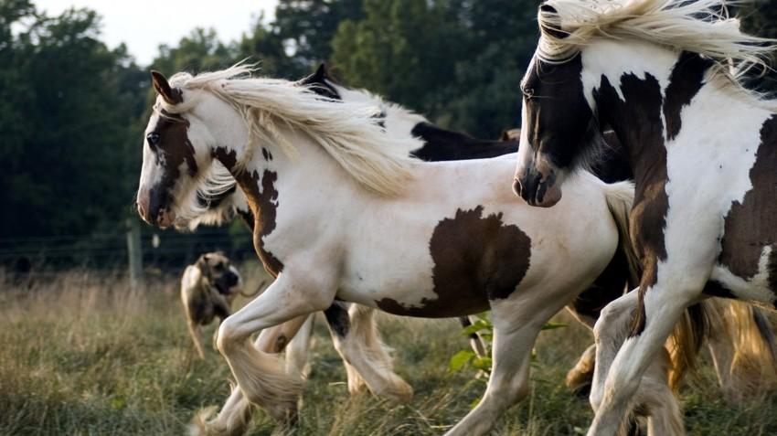 Острое обоняние лошади, факты, фото