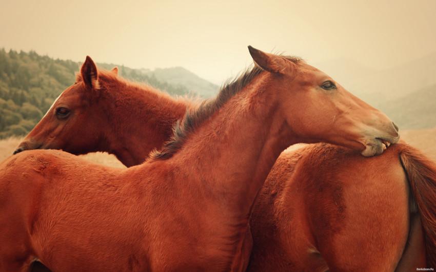 Послать лошадь вперед легче, чем остановить лошади, факты, фото