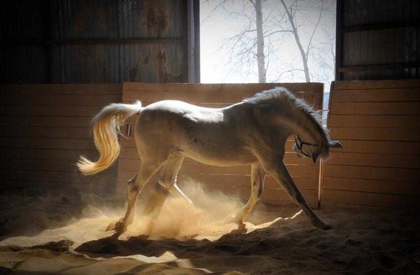 Гибкие к условиям жизни лошади, факты, фото