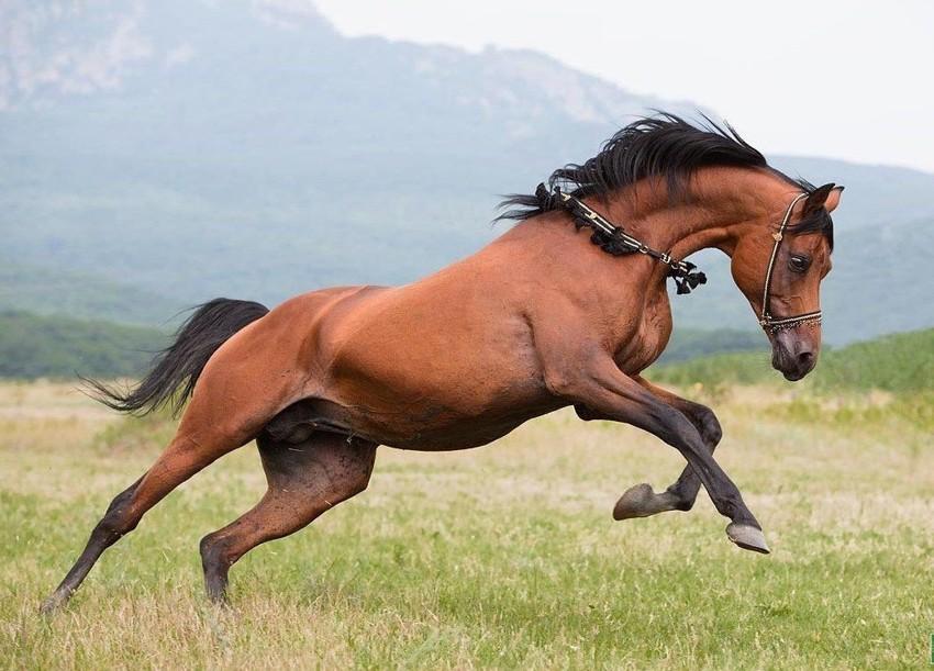 Путь падений и ошибок лошади, факты, фото