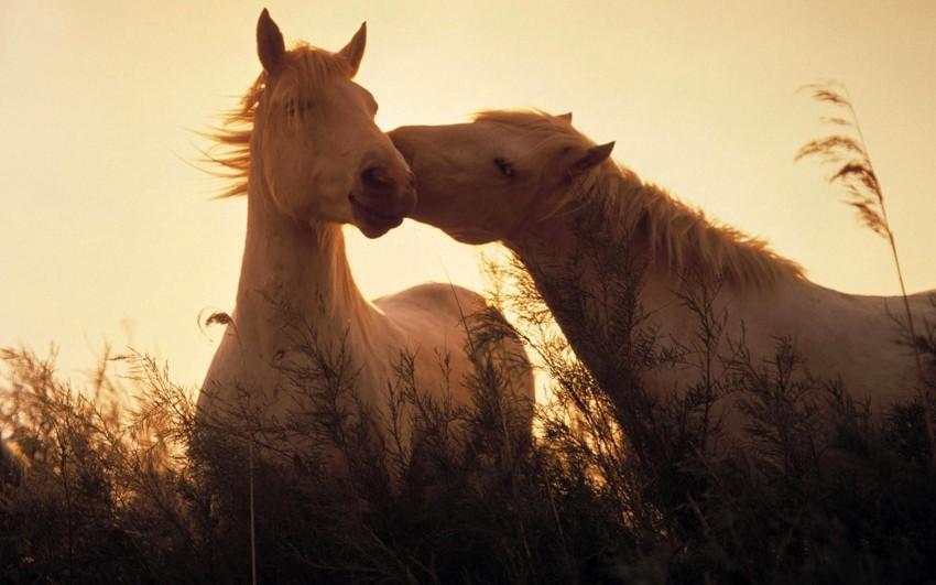 Пост любви к лошадям лошади, факты, фото