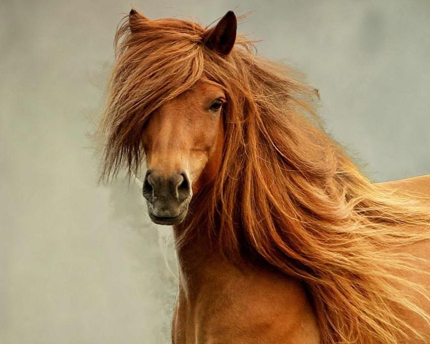 Первая лошадь была приручена в 4500 году до н.э. лошади, факты, фото