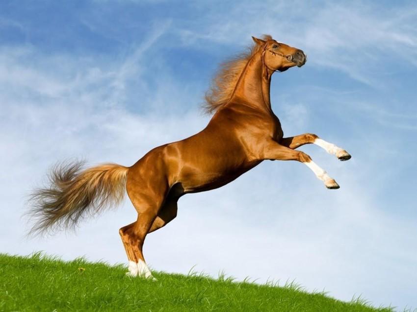 Кстати лошади, факты, фото