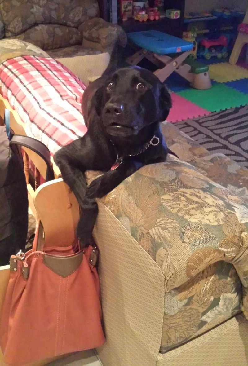 Я просто проверяю, все ли на месте в сумочке) животные, поймали, прикол