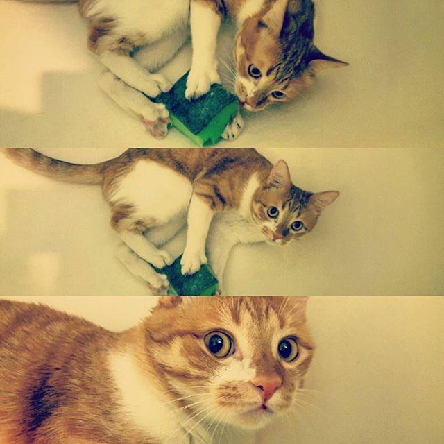 Просто привыкаю к ванне, авось, полюблю мыться... животные, поймали, прикол
