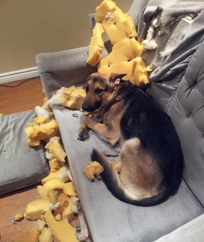 Я просто думал, что в диване зарыта большая печенька животные, поймали, прикол