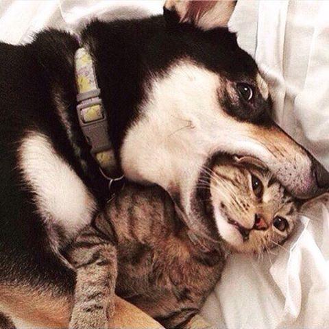 Просто дружеский поцелуй животные, поймали, прикол