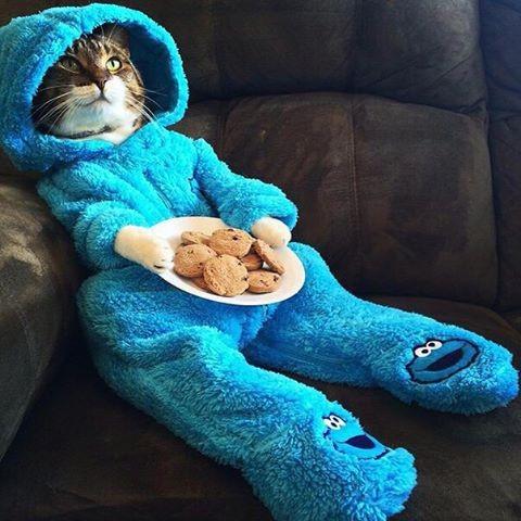 Только кошкам во дворе не показывай - засмеют! зима близко, наступают холода, питомцы, прикол, утепляемся
