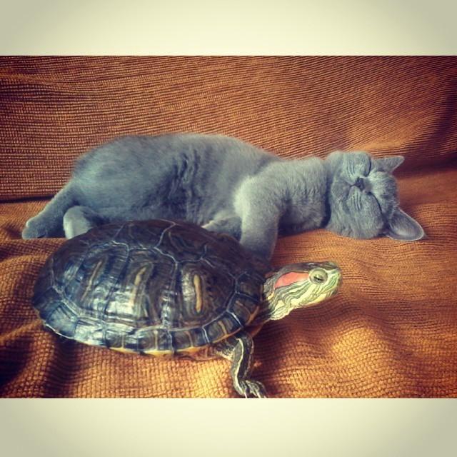 Я на солнышке лежу) дружба, животные, милота, прикол