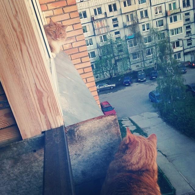 Привет, сосед! дружба, животные, милота, прикол
