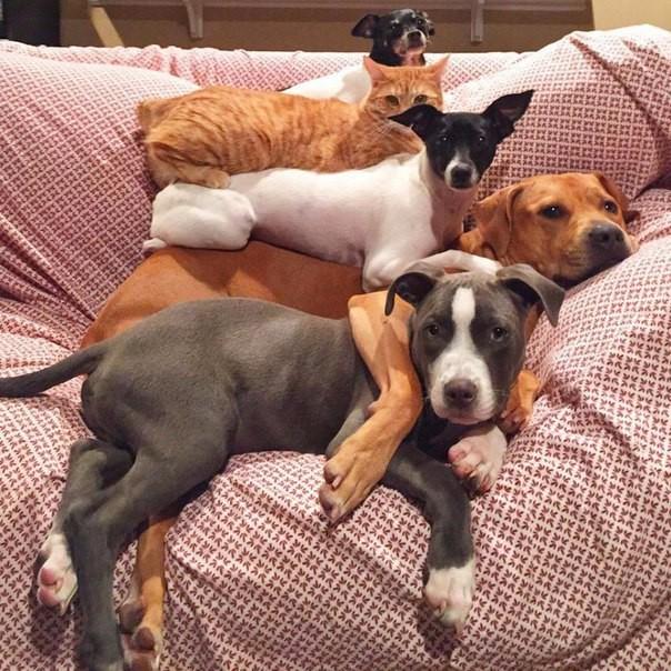 День десятый. Собаки все еще ничего не подозревают... дружба, животные, милота, прикол