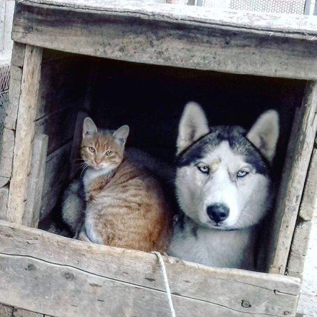 На страже дома дружба, животные, милота, прикол