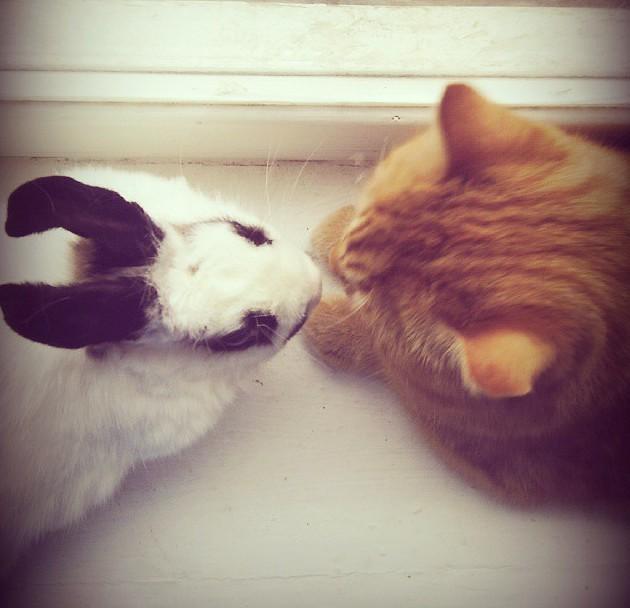 Вечная любовь дружба, животные, милота, прикол