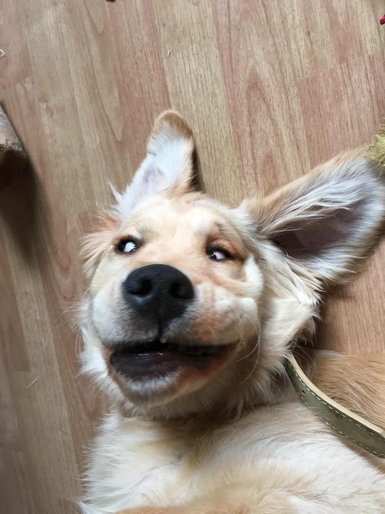 13. Так выглядит пес, обезумевший от радости домашние животные, смешные фотки
