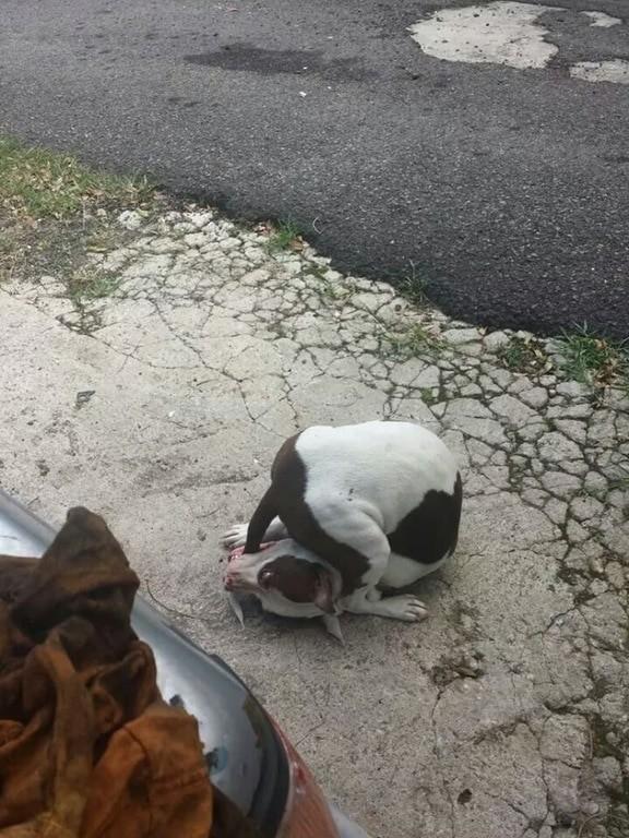 3. Эпическая битва между собакой и ее хвостом домашние животные, смешные фотки