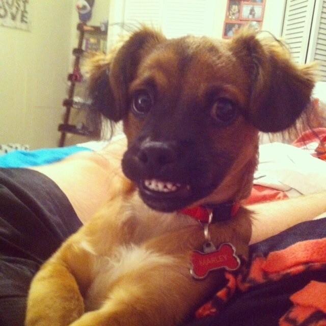 10. Обезоруживающая улыбка домашние животные, смешные фотки