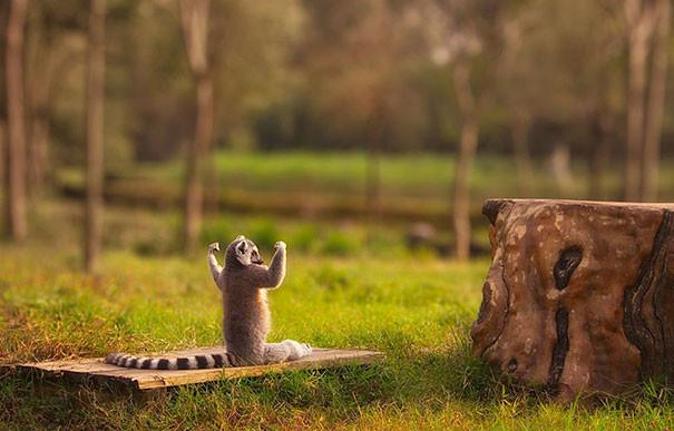 Силы прибывают! животные, йога, фото, юмор