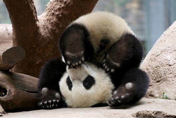 Я мне спокойно, удобно, радостно... животные, йога, фото, юмор