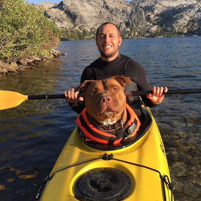 Пёс по кличке Фрикаделька, который до сих пор рад, что нашёл семью животные, собака, фрикаделька