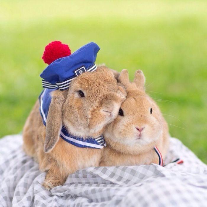 Встречайте самого стильного в мире кролика животные, кролик, милота