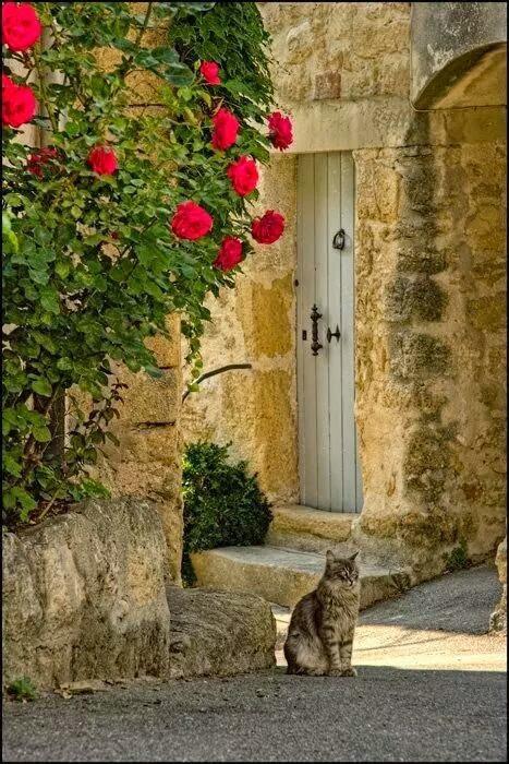 14. Кошко-статуя в Провансе, Франции вокруг света, животные, коты, фотография