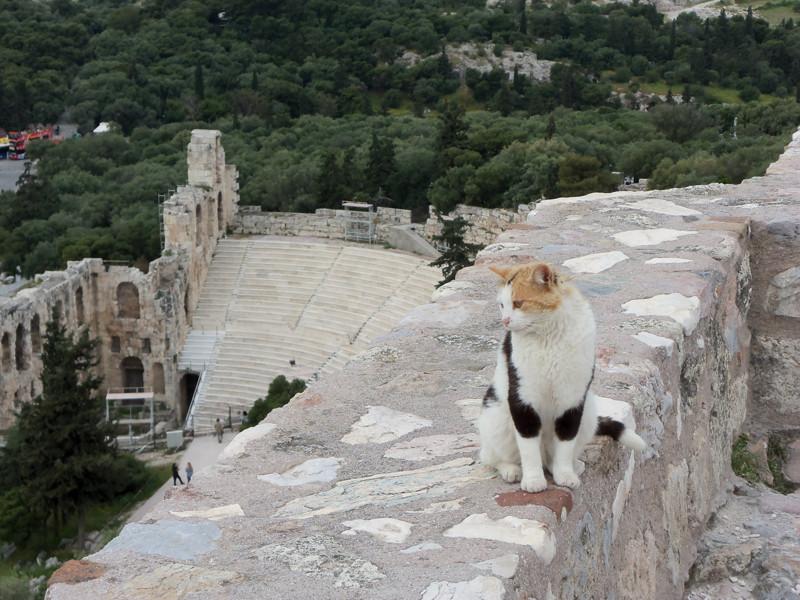 6. Обозревает Акрополь в Афинах вокруг света, животные, коты, фотография