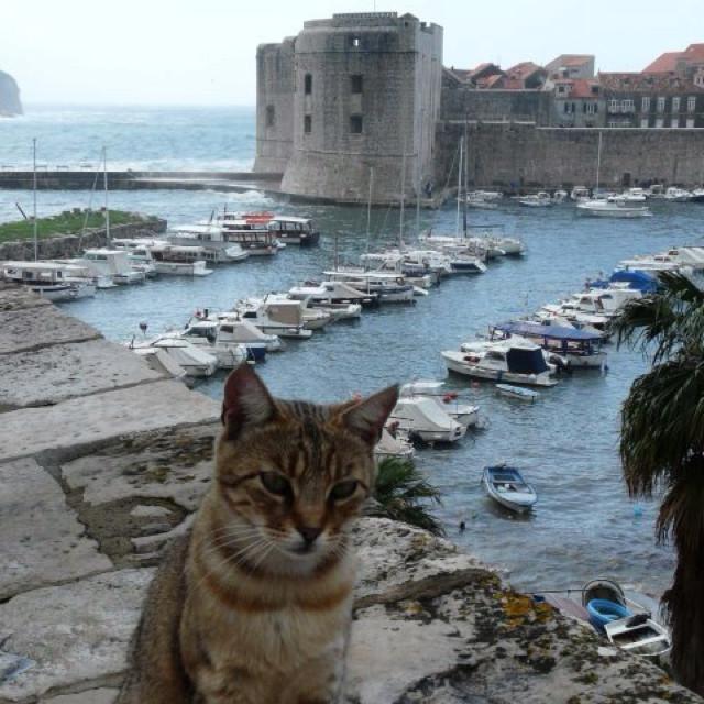 11. Вот вроде бы и хочется полюбоваться этой живописной бухтой и видом.. но котик же! вокруг света, животные, коты, фотография