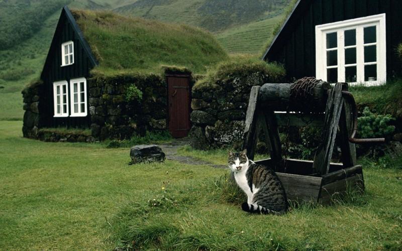 24. А этот культурно просвещается у музеев в Исландии вокруг света, животные, коты, фотография