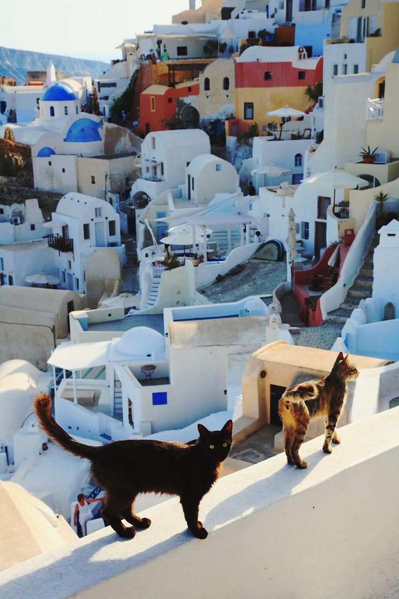 5. Шикарный вид на Санторини в Греции. Котофеи согласны вокруг света, животные, коты, фотография
