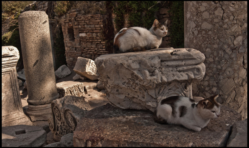 9. Кажется, они чрезвычайно довольны, что нашли это уютное местечко в Эфесе, Турции  вокруг света, животные, коты, фотография