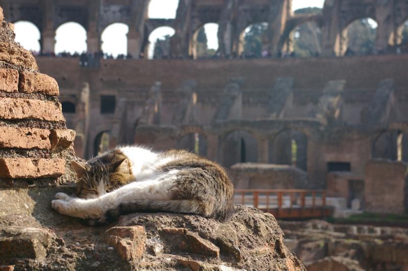 7. Где еще прикорнуть, как не в Колизее? вокруг света, животные, коты, фотография