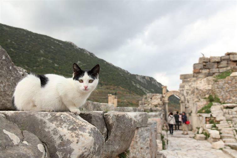 13. Просто отдыхаю на древних руинах... ну понимаете... ничего особенного вокруг света, животные, коты, фотография