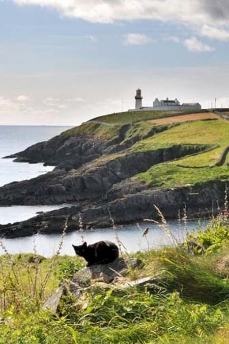 18. Ирландия – волшебная страна. Великолепные виды и коты повсюду! вокруг света, животные, коты, фотография