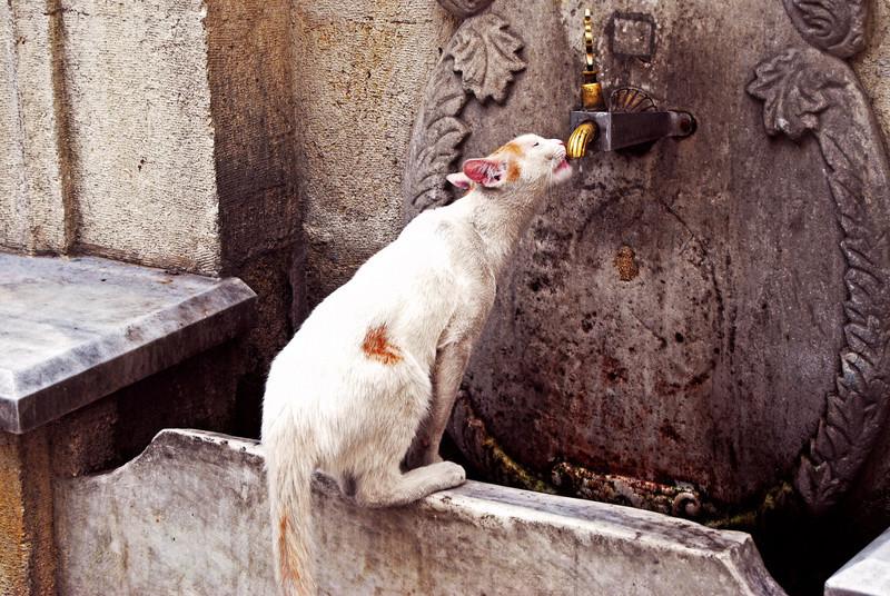 4. Остановился испить водицы из шикарного фонтана в Стамбуле вокруг света, животные, коты, фотография