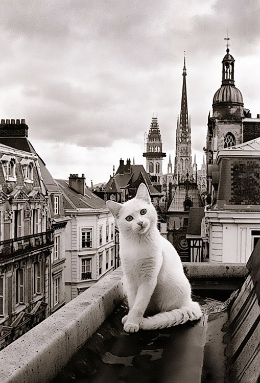 15. Да кому нужна Эйфелева башня? Будете в Париже, не упустите это чудо! вокруг света, животные, коты, фотография