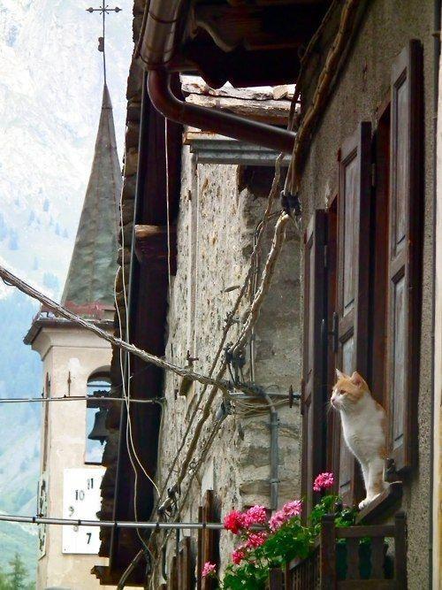 1. Кот Долонне наслаждается прекрасным видом в Валле-д'Аоста, Италии  вокруг света, животные, коты, фотография