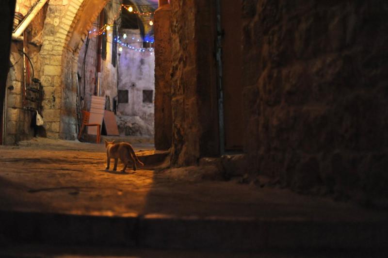 16. Кошка гуляет сама по себе в Иерусалиме вокруг света, животные, коты, фотография