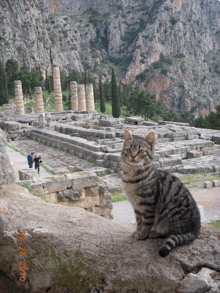 12. Храм Аполлона в Греции на фоне этого очаровательного существа кажется еще более внушительным вокруг света, животные, коты, фотография