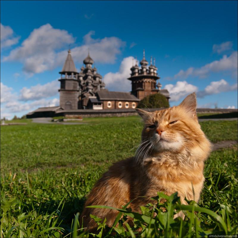 2. А этот пушистик принимает солнечные ванны на фоне Кижского погоста в Карелии вокруг света, животные, коты, фотография