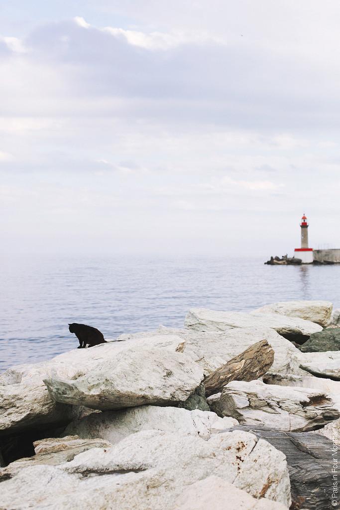 8. Ему нравится смотреть на воду на Корсике во Франции, но не окунаться в нее. НИКОГДА не окунаться. вокруг света, животные, коты, фотография