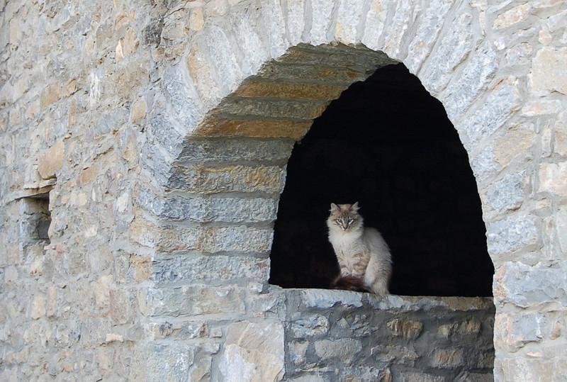 20. Пушистая красота расслабляется в Аинсе в Испании вокруг света, животные, коты, фотография
