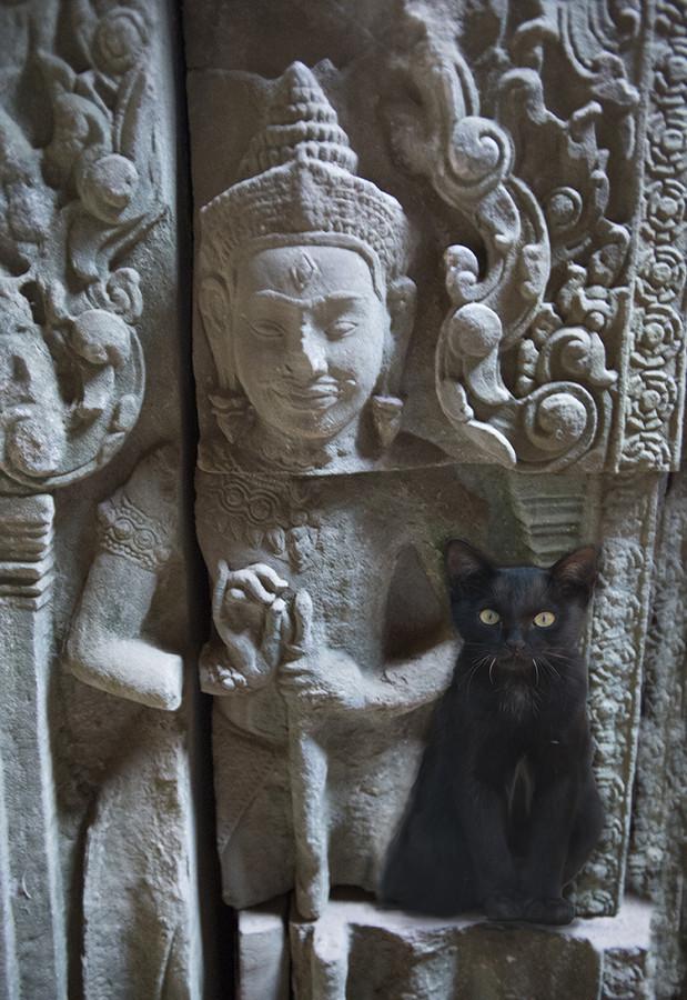 21. А этот кот из Камбоджи остро нуждался в компании вокруг света, животные, коты, фотография