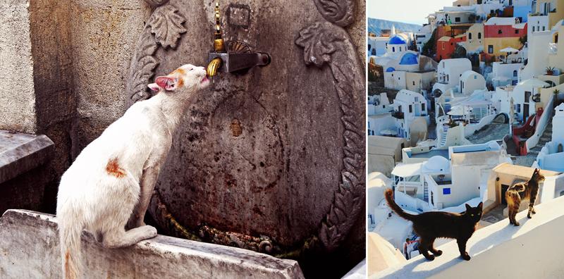 25 потрясающих фотографий котов в живописных уголках планеты вокруг света, животные, коты, фотография